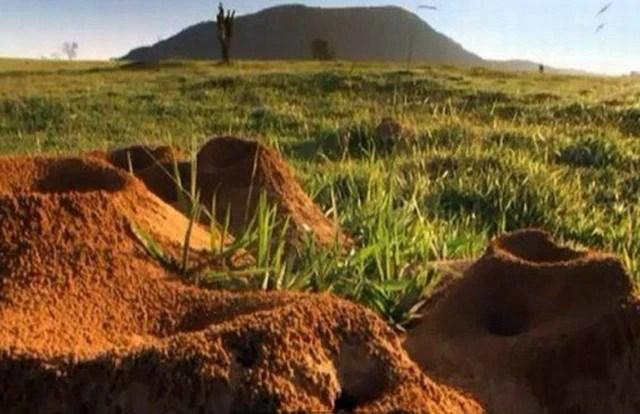 往百年蟻穴注入10噸水泥,一個宏大的蟻宮為之震撼!