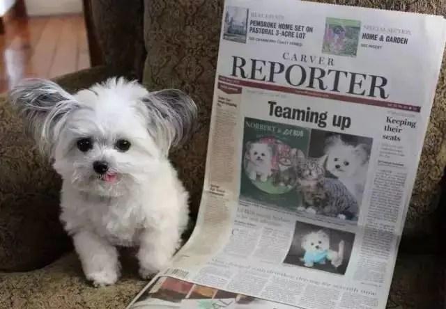 它是世界上最小的治癒犬,卻做了很多讓人類都感到慚愧的事