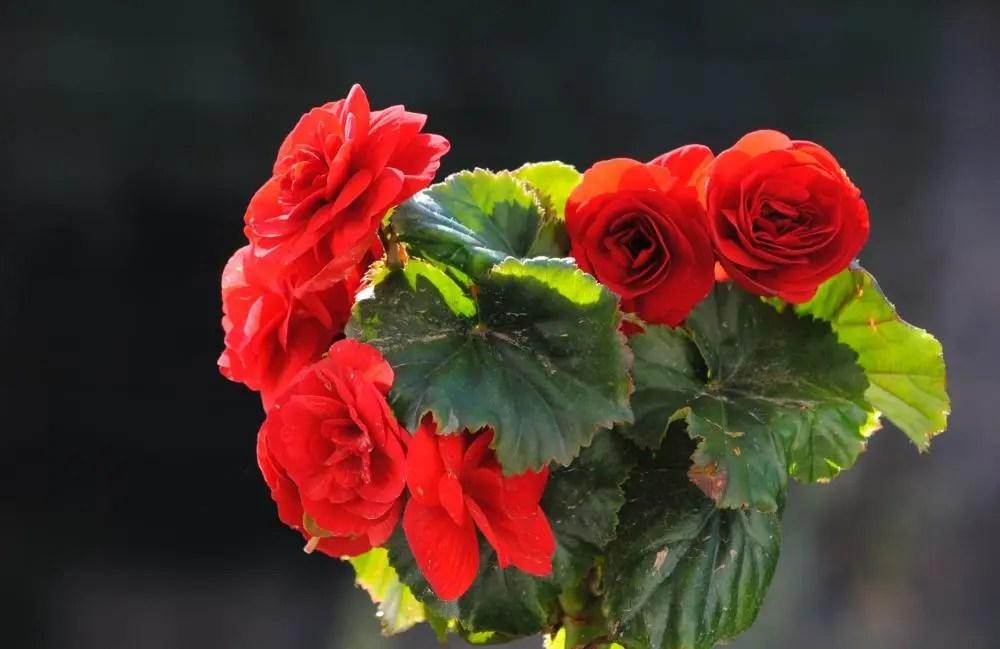 家居養花:掌握養花訣竅,再也不怕把花卉養死了!