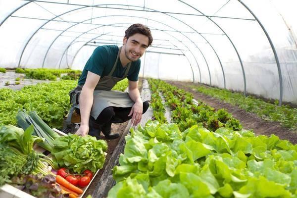生吃蔬菜已經成為一種時尚,但是這幾種不能生吃
