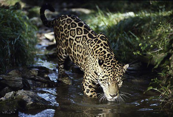 叢林蟒沉溺毒品被送戒毒所 動物界還有這些「癮君子」