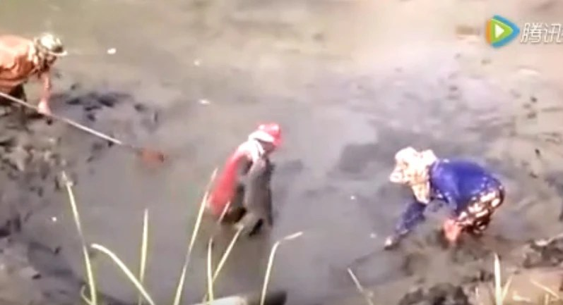 男子野外抽乾池塘水摸魚,沒想到抓到一條大傢伙,樂壞了