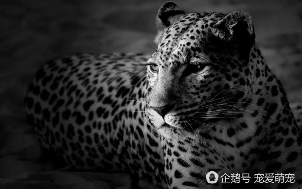 讓人過目不忘一眼就喜歡上的動物,卻因為人類的貪婪最後導致滅絕