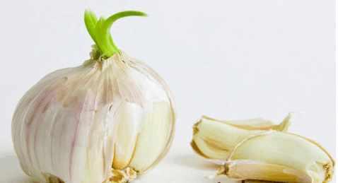 發芽的大蒜千萬別再仍了,大蒜髮芽後營養價值翻倍!