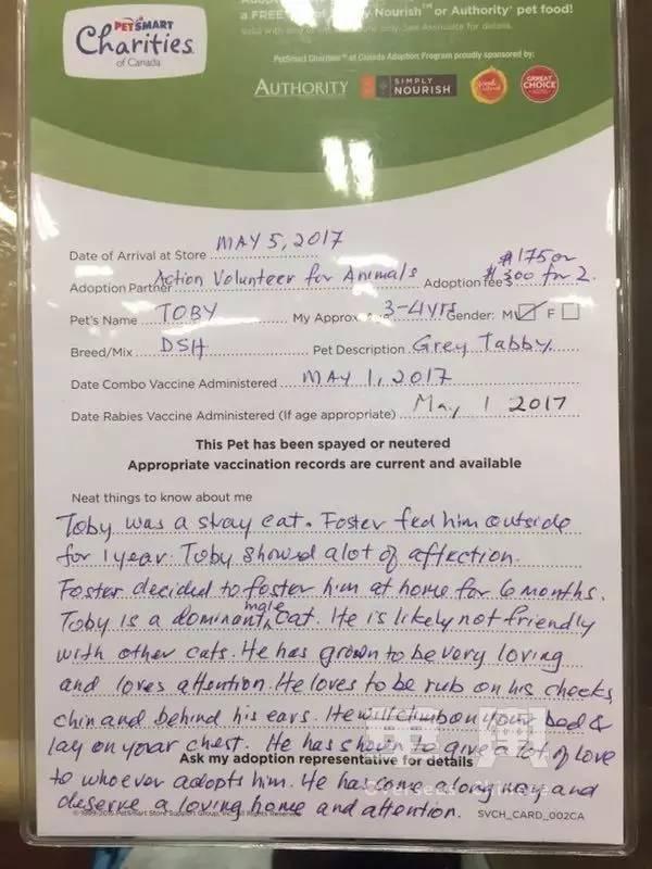 寵物店不讓賣喵星人、倉鼠能免費領養……在加拿大養寵物那些事兒,你真的知道嗎?
