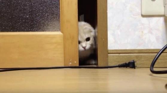 可爱猫咪暗中观察想抓电线,脸都挤扁了还是不肯放弃!