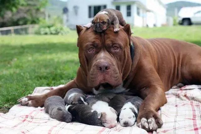 男子家里狗狗一连生8只,卖掉之后够买好几套房!