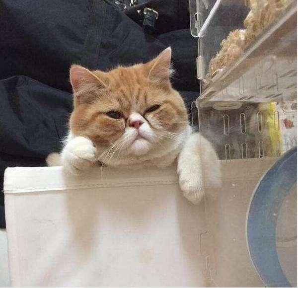 猫咪吃醋很严重,趁主人不注意对自家仓鼠下了黑手