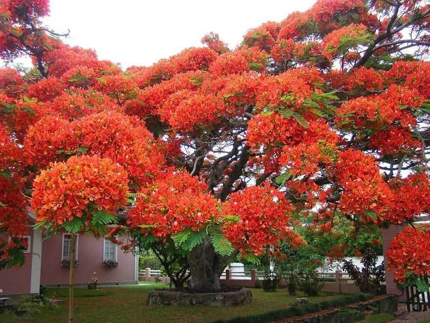 Картинки по запросу most beautiful trees in india