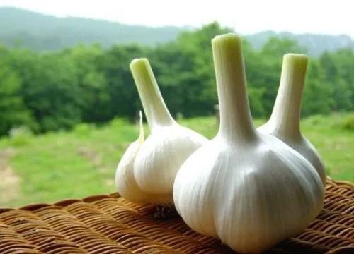 我們常吃的大蒜,竟然有這麼好的養生功效!