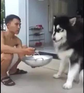 狗狗生病不愛吃飯,狗主人拿來食物,沒想到的是?