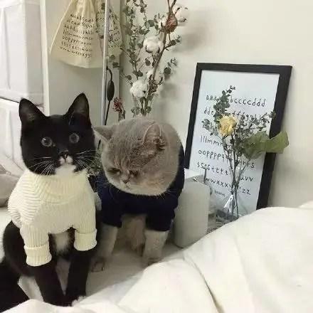 大臉貓星人的悲哀