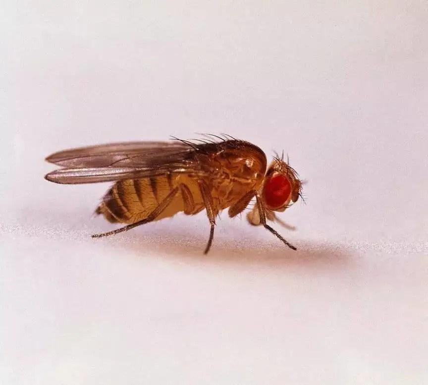 在楊梅里發現有小白蟲,怎麼辦?到底是什麼東西呢?