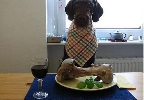 為什麼不能給狗狗吃這些食物?看完恍然大悟