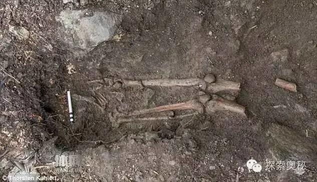 愛爾蘭200年古樹倒了,根部發現一具神秘骸骨