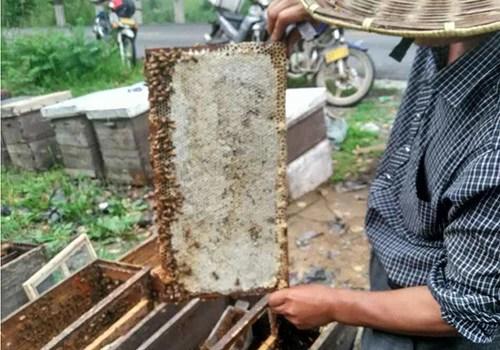 誰說蜂蜜不會變質?甚至很多養蜂人也都這麼以為!