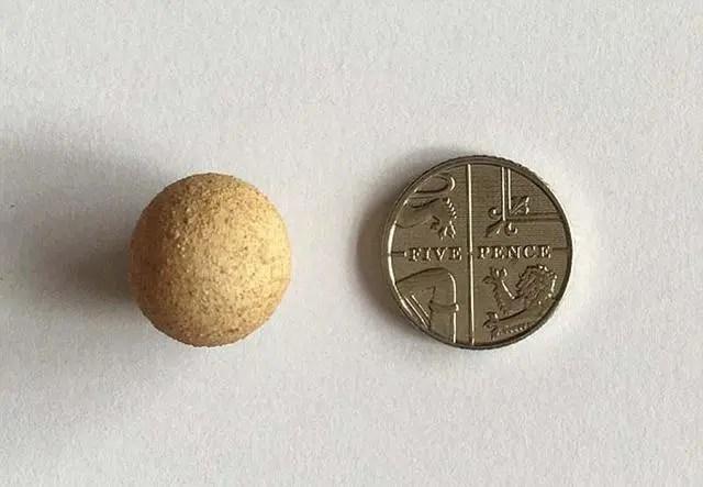世界最大的雞蛋和最小的雞蛋 差距有多大?