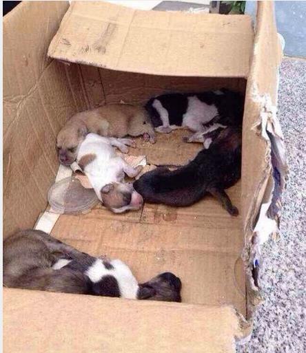 把幾隻小狗送到收容所,沒想到竟然是這樣的結果