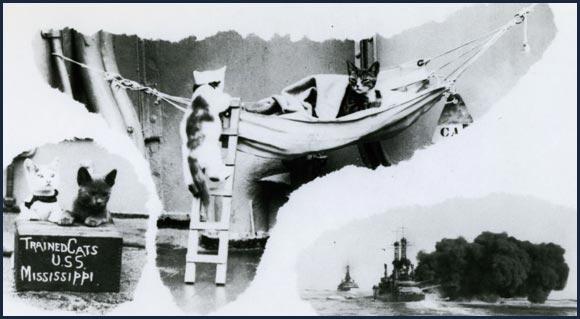 記錄戰爭中的喵星人與美國海軍!