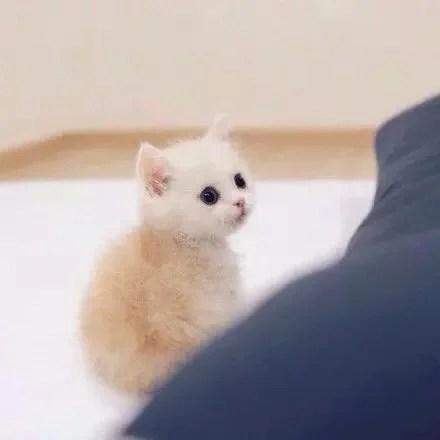 可愛的小喵咪無辜的眼神,看著心都要被萌酥了
