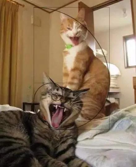 貓奴們,你知道你家喵大人為啥那麼萌嗎?原因竟然是