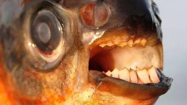 膽小勿入!十種來自亞馬遜河的可怕動物
