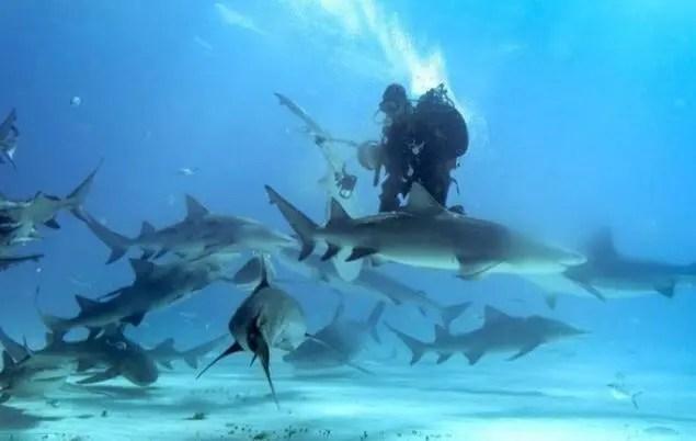 攝影師冒死近距離拍攝鯊魚,不料鯊魚發飆這麼做,攝影師要哭了