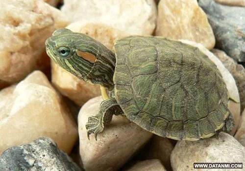 盤點入侵我國的危險物種:生態環境面臨巨大威脅