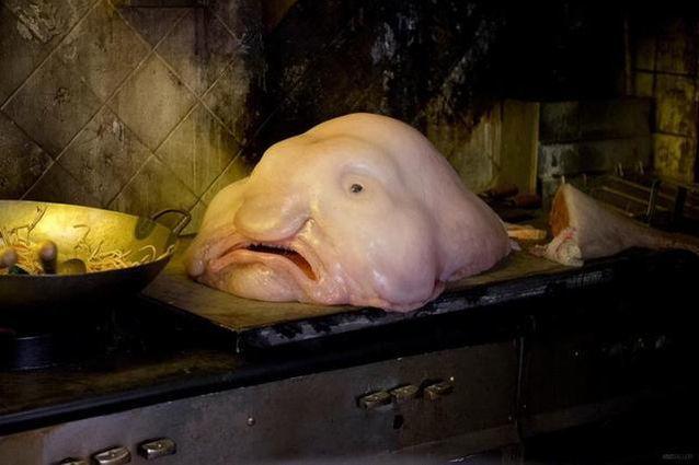沒見過這麼醜陋的魚類,它不僅丑還有毒,千萬不能吃