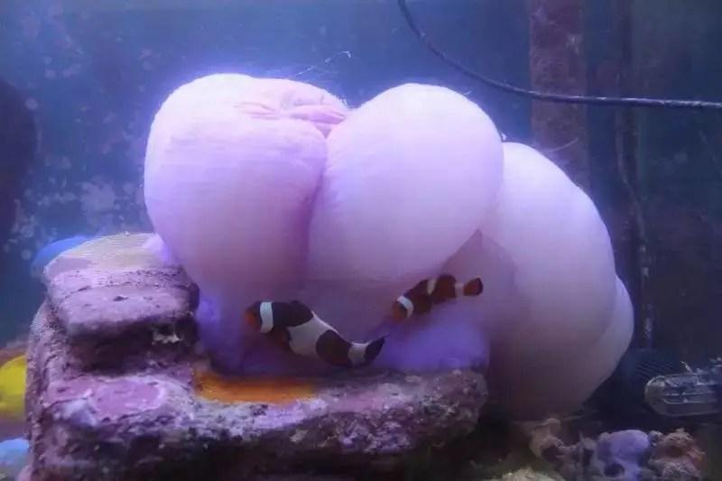 超級海缸,毀於一葵