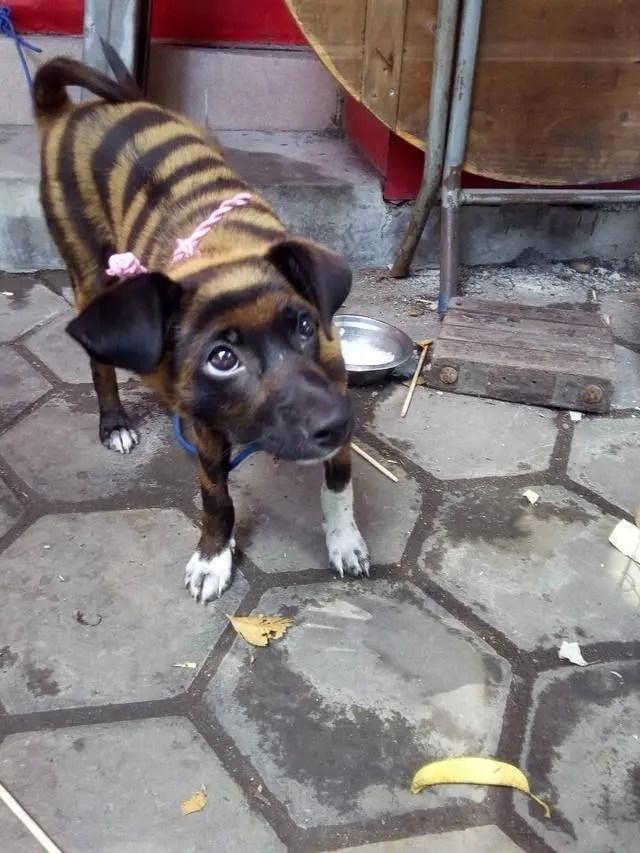 這隻狗不知道是不是被染色了,看起來讓我不敢相信