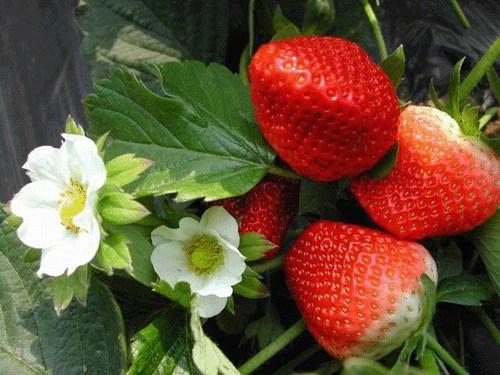 有些水果的這些神奇功效,你知道嗎?