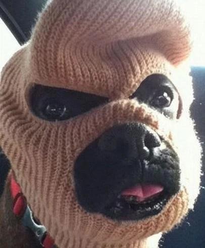 看這些被搞怪的寵物狗,不是它本意,只怪主人太逗逼