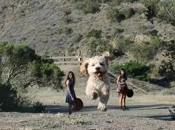 外國妹子真會玩,把狗狗與自己換了個角度成了這樣子