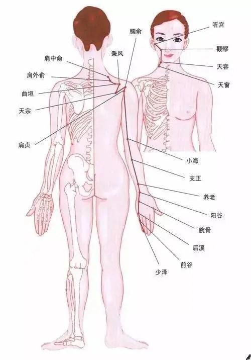 哺乳困難?腮腺炎?鼻竇炎?按揉「小腸經」上兩個穴位恢復正常!