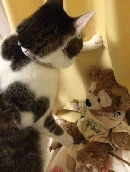 被貓壁咚是什麼體驗?放開那隻喵,讓我來