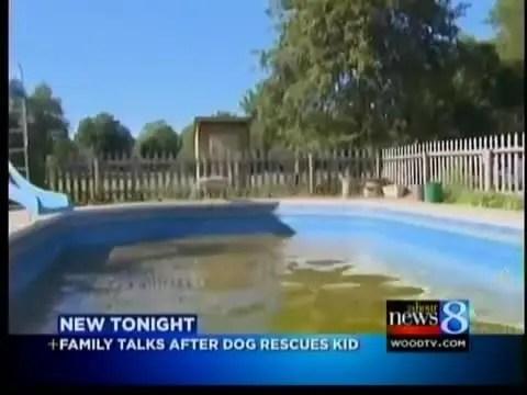 小孩跌入泳池後狗狗跟跳下去,用身體托舉小孩出水面