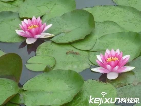 植物也愛犯困 植物界的神奇植物們