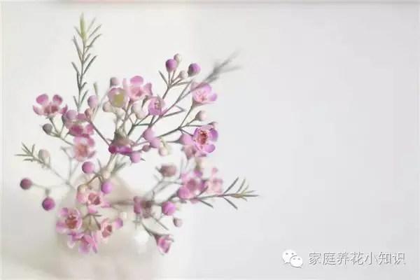 養花知識:家庭養花之新買來的花到底該如何養護?