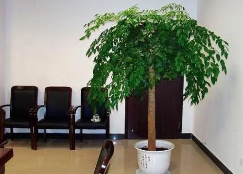 適合室內種植的大型植物盆栽