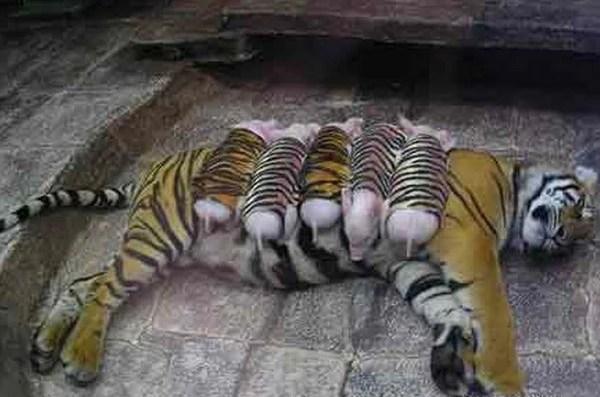 自從認領了這麼一群熊孩子,我再也不是威武的虎媽啦