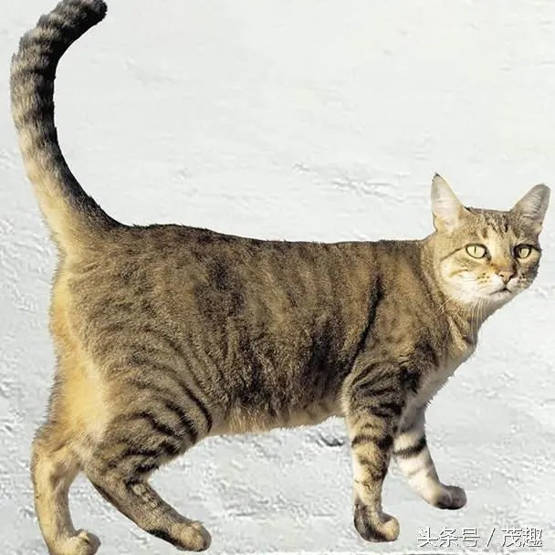 創意超擬真貓貓壁貼,讓你假裝有養貓