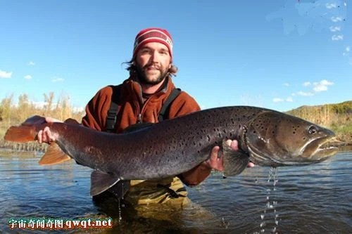 盤點地球上的十大巨型淡水魚,巨大鯰魚293公斤