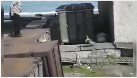 男子狠心竟將狗拋向北極熊 畫面不忍直視