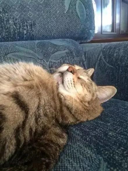 主人一回到家,看到貓大人就這樣睡著了,一看就