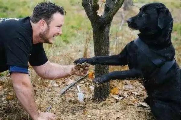 小哥無意撿回一隻流浪狗,誰知卻給他帶來千萬財富!