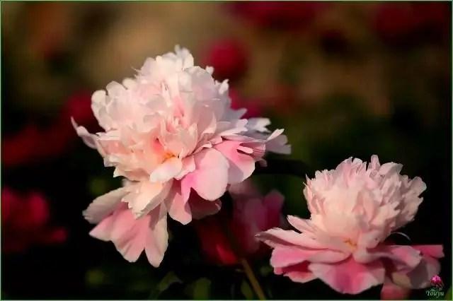 采野花、點荷燈才是過七夕的正確姿勢