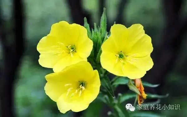 家庭養花知識:超級美卻有毒!這些植物千萬別放室內!