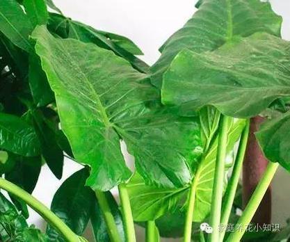 家庭養花:9款室內吸毒植物中意哪一盆就將它搬回家吧