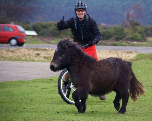 世界上最小的一匹馬,你見過嗎?